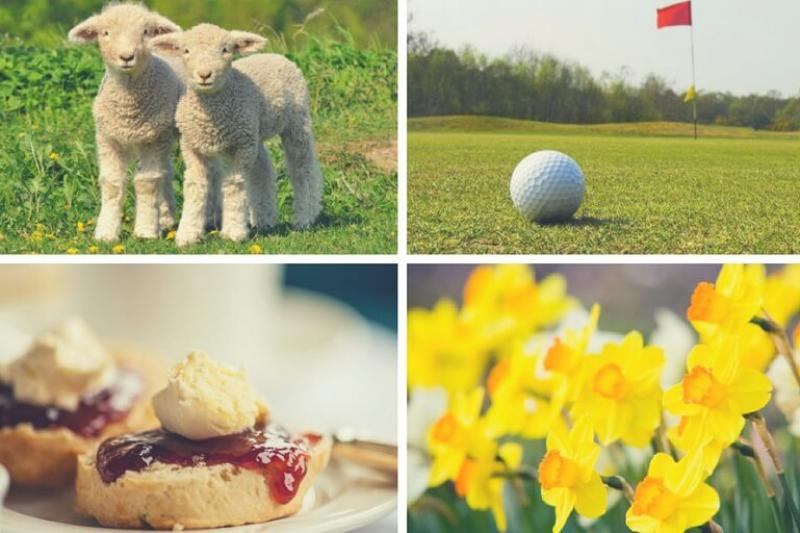 Spring Breaks in South Devon: Top Activities, Events & Offers