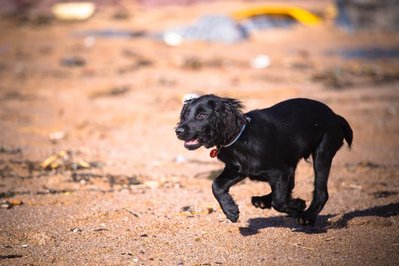 Dog friendly beaches in the South Hams